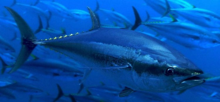La pêche à La Réunion, où sont les poissons ?