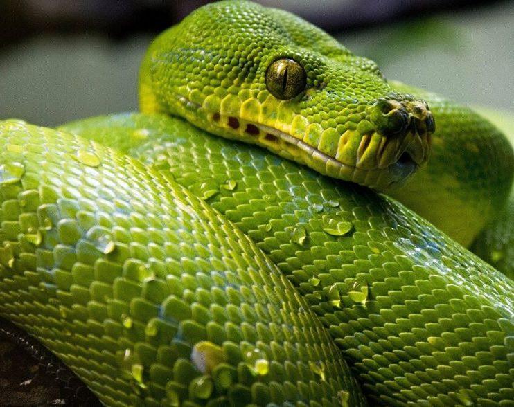 Pandémie Covid-19 : le serpent est-il en train de se mordre la queue ?